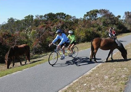 Cyclists riding on trail along with ponies grazing